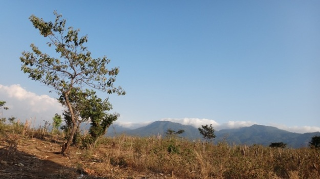 mountain-view-field2